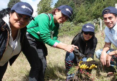 Domino suma tres años en tareas de reforestación